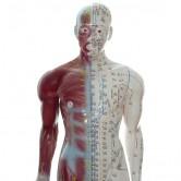 Akupunktur - Modelle