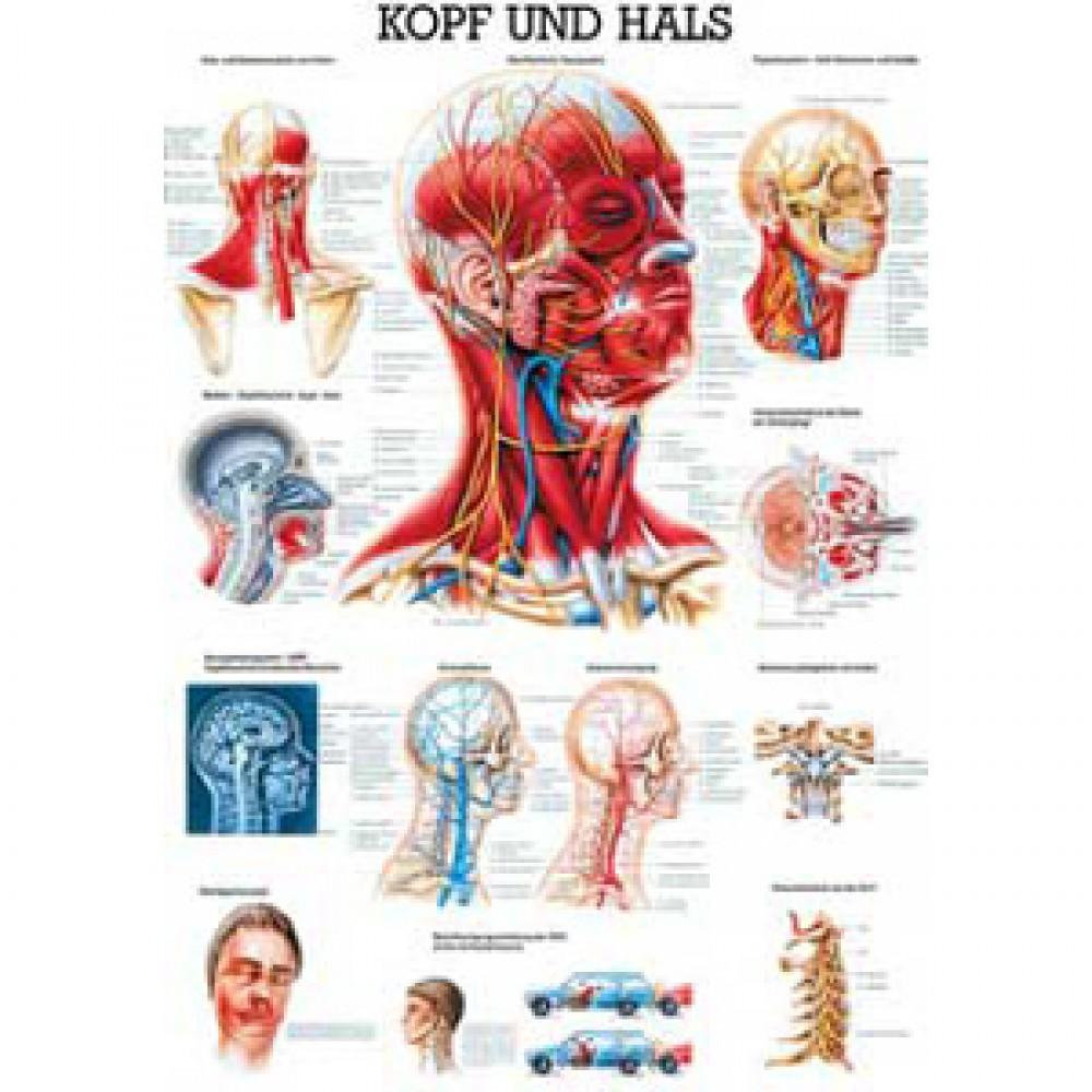 Karte Kopf und Hals Format 70x100cm-3967