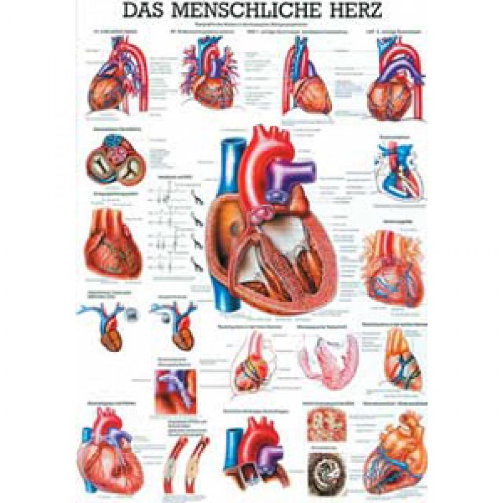 Karte menschliches Herz Format 70x100cm-8956