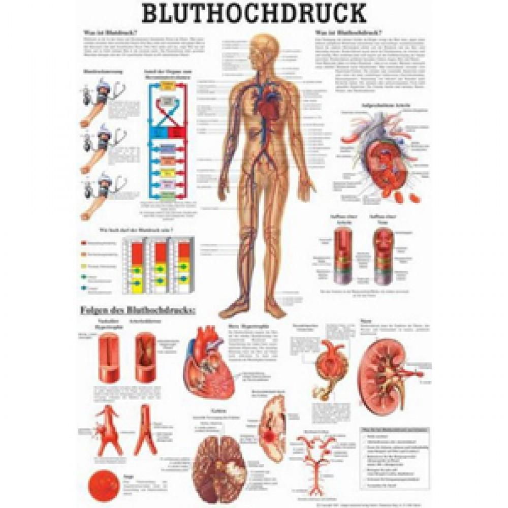 Fantastisch Laminiert Anatomie Poster Bilder - Anatomie Von ...