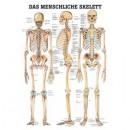 Karte Skelettsystem Format 70x100cm
