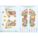 Kliegel: Reflexzonen und Organsprache Tafel