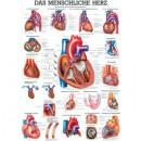 Karte menschliches Herz Format 70x100cm