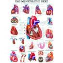 Mini-Poster Das Herz Format 23 x 33 cm