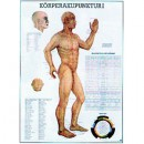 Mini-Poster Körperakupunktur I Format 23 x 33 cm