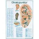 Mini-Poster Ohrakupunktur Format 23 x 33 cm
