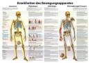 Karte Krankheiten des Bewegungsapparats Format 70x100cm