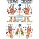 Poster Reflexzonendiagnostik u. Therapie Format 50x70cm
