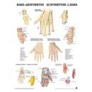 Mini-Poster Hand-Akupunktur Format 23 x 33 cm