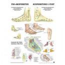 Mini-Poster Fuß-Akupunktur Format 23 x 33 cm