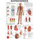 Poster Bluthochdruck Format 50x70cm